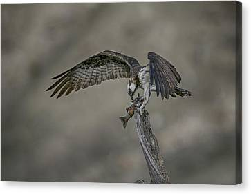 Catch Of The Day Canvas Print by Gary Hall