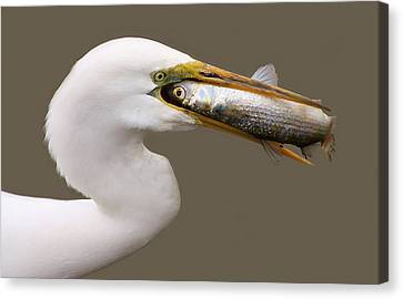 Catch Of The Day Canvas Print by Paulette Thomas