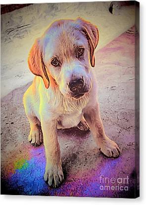 Catch The Rainbow Canvas Print by GabeZ Art