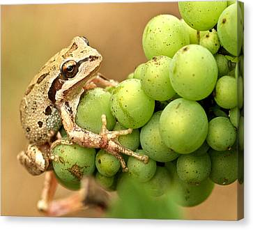 Pinot Noir Canvas Print - Catching A Ride On The Pinot by Jean Noren