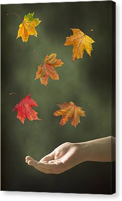 Catching Leaves Canvas Print by Amanda Elwell