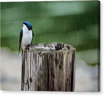 Catching Raindrops Canvas Print