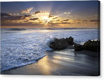 Catching The Light Canvas Print by Debra and Dave Vanderlaan