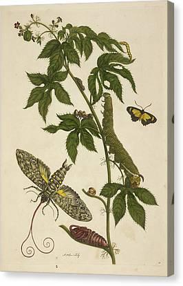 Caterpillars Feeding On A Plant Canvas Print