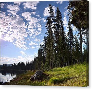 Cathedral Of Trees Canvas Print by Rich Rauenzahn