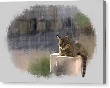 Catnap Canvas Print by Usha Shantharam