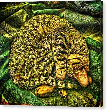 Catnappin' On A Cold Rainy Sunday Canvas Print by Randy Forrester