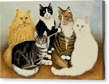 Cats Cradle Canvas Print by Pat Scott
