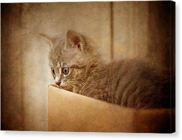 Cardboard Canvas Print - Cat's Eyes #03 by Loriental Photography