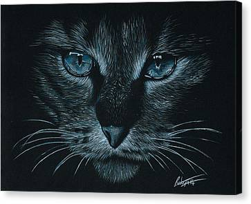 Cats Eyes Canvas Print by Robyn Green