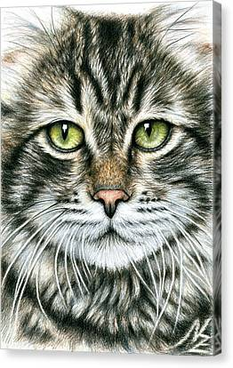 Cats Face Canvas Print by Nicole Zeug