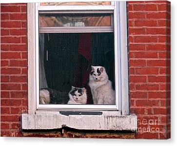 Canvas Print - Cats On A Sill by Randi Shenkman