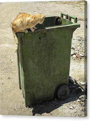 Cats On And In Garbage Container Canvas Print by Patricia Hofmeester