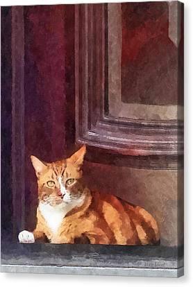 Cats - Orange Tabby In Doorway Canvas Print by Susan Savad