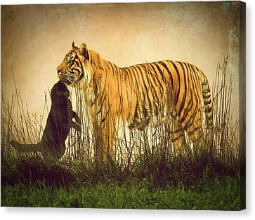 Cats Canvas Print by Sharon Lisa Clarke