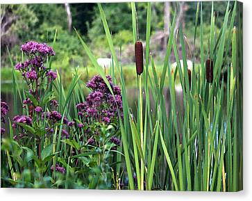 Cattail Pond II In Watercolor Canvas Print by Suzanne Gaff