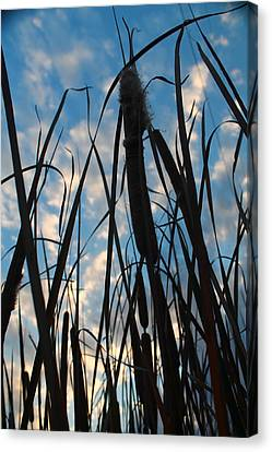 Canvas Print featuring the photograph Cattail Sky by Alicia Knust