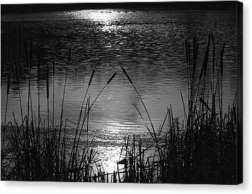 Cattails 3 Canvas Print by Susan  McMenamin