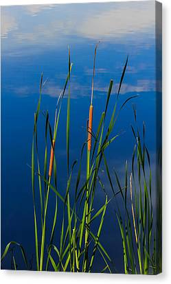 Cattails At Overholster Canvas Print by Doug Long