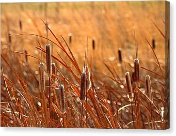 Canvas Print featuring the photograph Cattails  by Lynn Hopwood