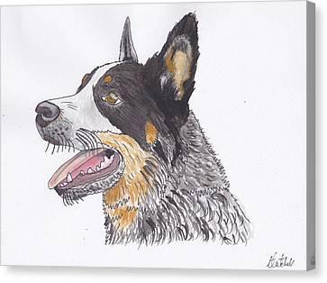 Cattle Dog Canvas Print by Amanda Mitchell
