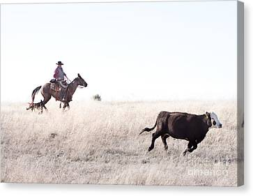 Cattle Drive Canvas Print by Cindy Singleton