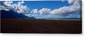 Cattle Pasture, Highway N7 From Cape Canvas Print by Panoramic Images