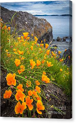 Cattle Point Poppies Canvas Print by Inge Johnsson