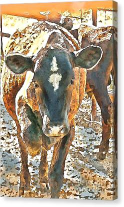 Cattle Round Up Canvas Print by Artist and Photographer Laura Wrede