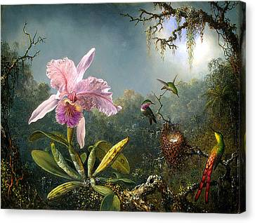 Hummingbird Canvas Print - Cattleya Orchid And Three Brazilian Hummingbirds by Emile Munier