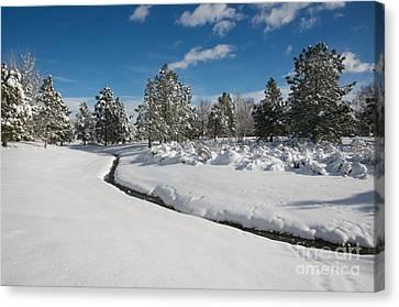 Canvas Print featuring the photograph Caughlin Creek Snowfall by Vinnie Oakes