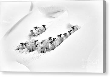 Caught In A Drift Canvas Print by Tim Gainey
