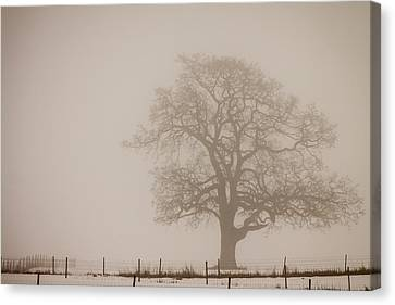 Caught In The Fog Canvas Print by Claude Dalley