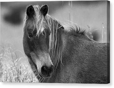 Feral Canvas Print - Caught My Eye by Betsy Knapp