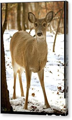 Caught Playing In The Snow Canvas Print