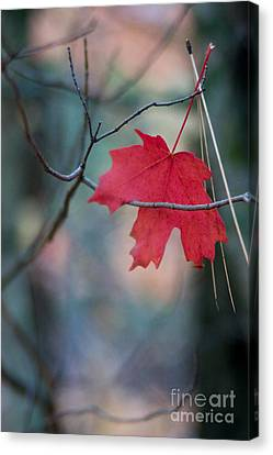Caught Canvas Print by Ron Chilston