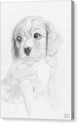 Cavalier King Charles Spaniel Puppy Canvas Print by David Smith