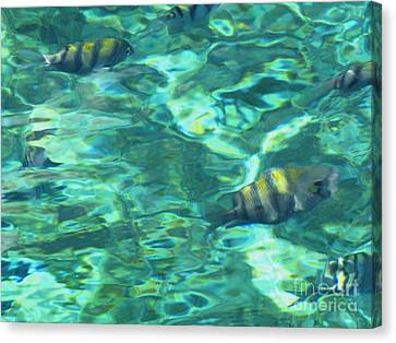 Cayman Blue Canvas Print by Neil Zimmerman