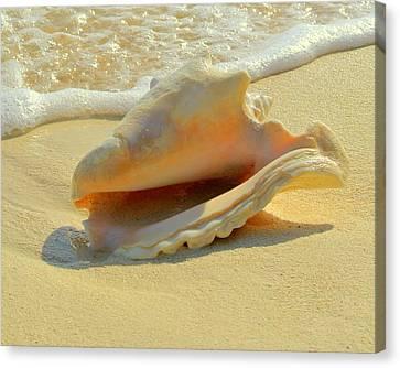 Cayman Conch #1 Canvas Print