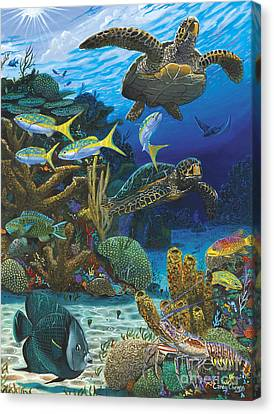 Fish Canvas Print - Cayman Turtles Re0010 by Carey Chen