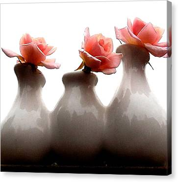 Cecil Brunner Roses  Canvas Print by Karen Molenaar Terrell