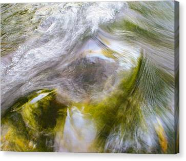 Cedar 16 Canvas Print
