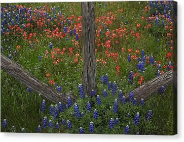 Cedar Fence In Llano Texas Canvas Print