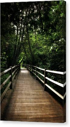 Cedar Pathway 2.0 Canvas Print by Michelle Calkins
