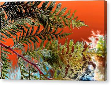 Cedar Canvas Canvas Print by Gwyn Newcombe