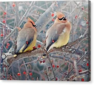 Cedar Waxwings Canvas Print by Ken Everett