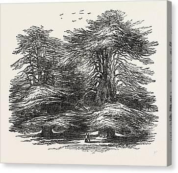 Cedars, At Chorley Wood House, Hertfordshire Canvas Print by English School
