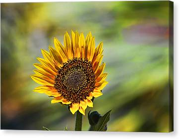 Celebrating The Sunlight Canvas Print by Gary Holmes