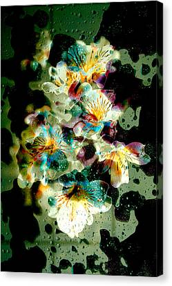 Celestial Flowers Canvas Print by Loriental Photography