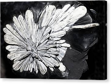 Celestine I Canvas Print by Dirk Wiersma